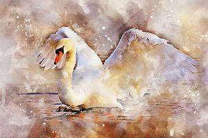 swan-2893562_1280